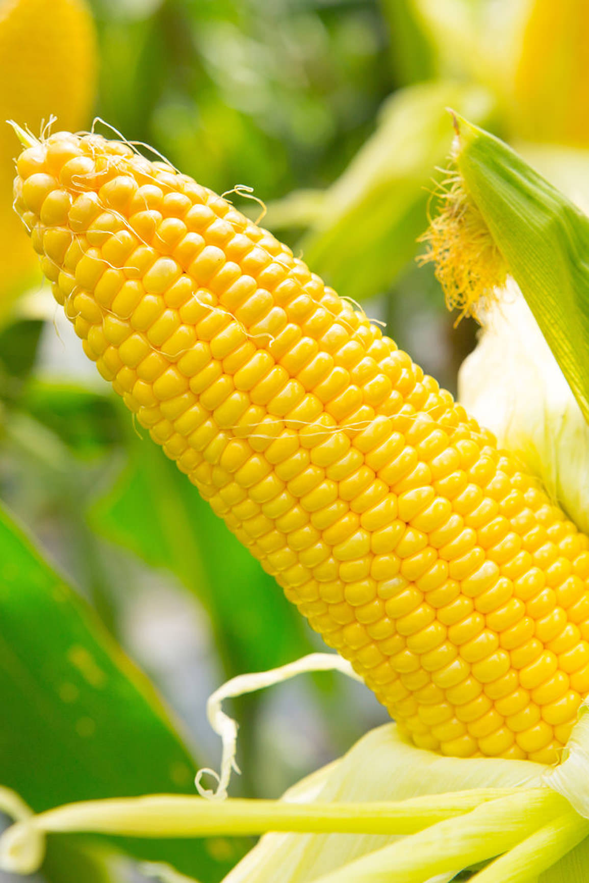 Dixy Lily Corn Ingredient